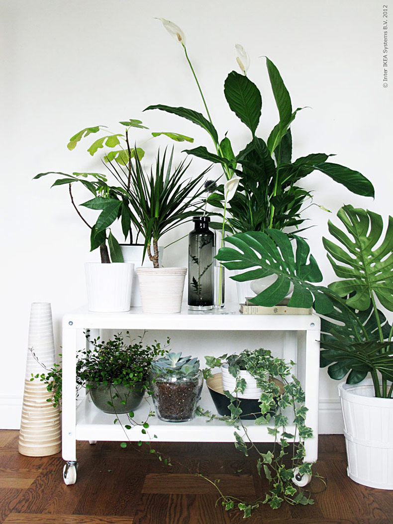 Inredning med gröna växter