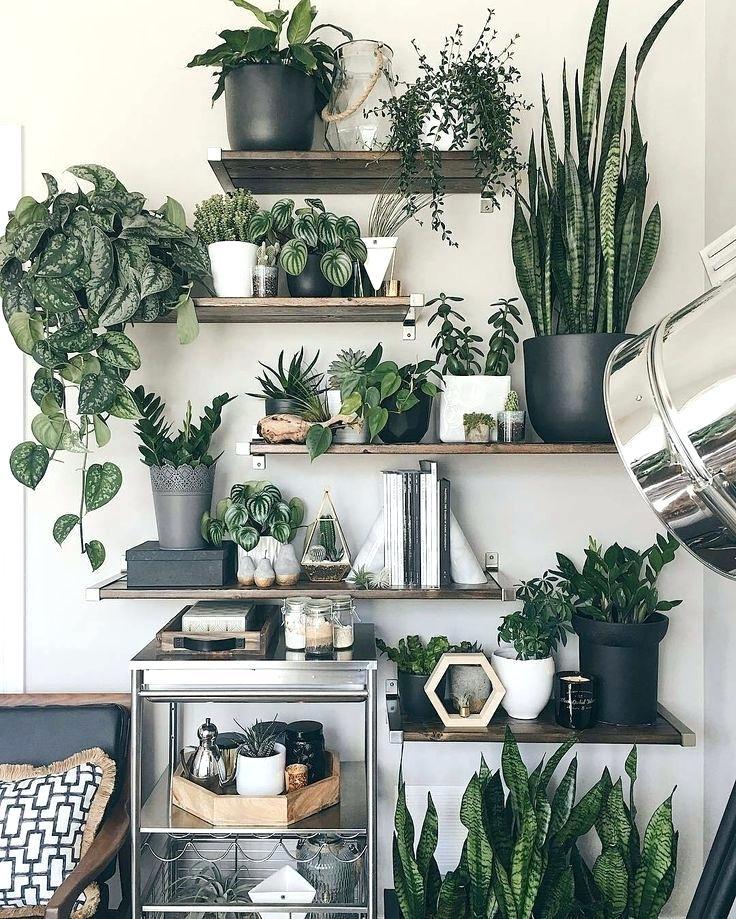 Inredning gröna växter