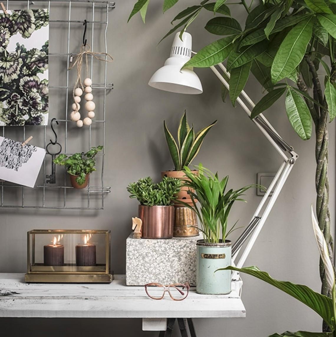 Så inreder du ett personligt & inbjudande hem med växter