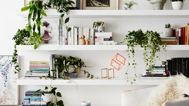 Lyft atmosfären och snygga till inredningsstilen i ditt hem med växter